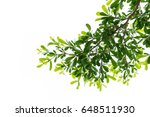 leaves isolated on white... | Shutterstock . vector #648511930