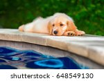 funny photo of lazy little... | Shutterstock . vector #648549130