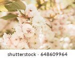 natural abstract background... | Shutterstock . vector #648609964