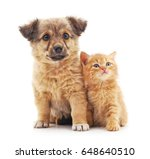 Stock photo kitten and puppy isolated on a white background 648640510