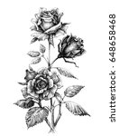 hand drawn rose vector etch... | Shutterstock .eps vector #648658468