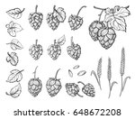 hand drawn engraving style hops ... | Shutterstock .eps vector #648672208