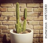 Skinny Green Potted Cactus...