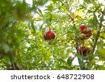 garnet garden   Shutterstock . vector #648722908