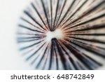 Sea Shell Macro Close Up...