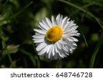flower of a daisy close up | Shutterstock . vector #648746728