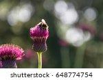 amazing view of bumble bee... | Shutterstock . vector #648774754