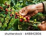 hand farmer picking coffee bean ... | Shutterstock . vector #648842806