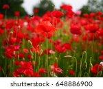 poppy flower | Shutterstock . vector #648886900