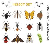 fly insects wildlife entomology ...   Shutterstock .eps vector #648887584