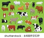 Various Cow Bull Cattle Poses...