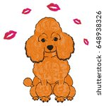 Cute And Little Orange Poodle...