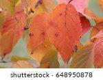 trees in autumn park  | Shutterstock . vector #648950878