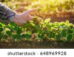 close up of female farmer hand... | Shutterstock . vector #648969928