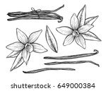 vanilla pods and vanilla flower ... | Shutterstock .eps vector #649000384