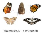 Various Butterfly Isolated On...