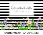 popular essential oil plants... | Shutterstock .eps vector #649043833
