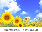 bright yellow sunflowers on... | Shutterstock . vector #649056160