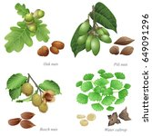 four nuts with plant and peeled ... | Shutterstock .eps vector #649091296