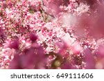 beautiful pink flowers... | Shutterstock . vector #649111606