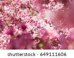 beautiful pink flowers... | Shutterstock . vector #649111606