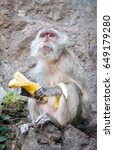 one monkey with banana sit on... | Shutterstock . vector #649179280