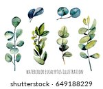 set of eucalyptus branches... | Shutterstock . vector #649188229