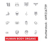 human body organs  human body ... | Shutterstock .eps vector #649216759