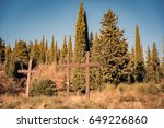 Small photo of Wooden crusts in unspoilt nature to symbolize Christian religion