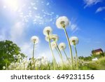 lot of dandelions close up on... | Shutterstock . vector #649231156