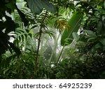 Misty Jungle   Rainforest Scene