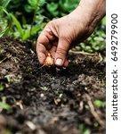 Women's Hand Sadi In Soil Soil...