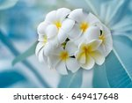 group of yellow and white... | Shutterstock . vector #649417648