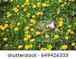 racket of badminton and... | Shutterstock . vector #649426333