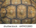 Stock photo portrait of a giant tortoise close up 649431883