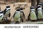 brillenpinguin  spheniscus    Shutterstock . vector #649454980