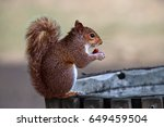 Squirrel On A Trash Bin In Hyd...