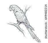 macaw parrot ara illustration... | Shutterstock .eps vector #649482214