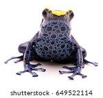 a poison dart frog  dendrobates ...   Shutterstock . vector #649522114