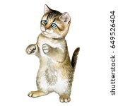 the british kitten sits on its... | Shutterstock . vector #649526404