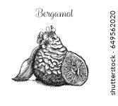 hand drawn bergamot   Shutterstock .eps vector #649562020