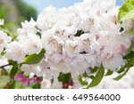 beautiful background of white...   Shutterstock . vector #649564000