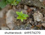 show with macro view.top view... | Shutterstock . vector #649576270