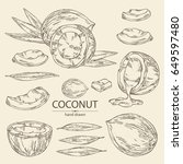 collection of coconut  coconut  ...   Shutterstock .eps vector #649597480