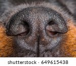 Rottweiler Dog Nose Close Up