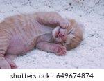 Stock photo small ginger cat kitten kitten sleeping domestic cat newborn kitten orange kitten one week old 649674874