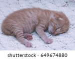 Stock photo small ginger cat kitten kitten sleeping domestic cat newborn kitten orange kitten one week old 649674880