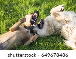 Stock photo two dogs playing rough in grass 649678486