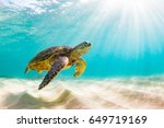 Stock photo endangered hawaiian green sea turtle cruising in the warm waters of the pacific ocean in hawaii 649719169