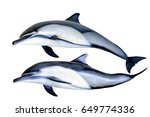 jumping dolphins isolated on... | Shutterstock . vector #649774336